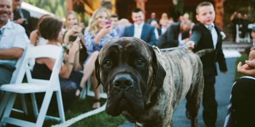 Top 7 Wedding and Engagement Photos with Pets